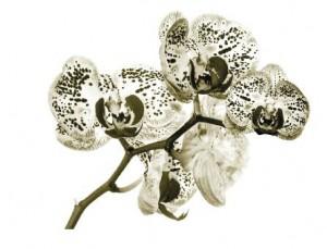 sherwood-flower-masterplan